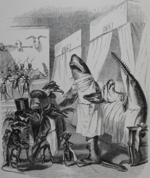 """I often illustrated Stan's columns with sketches by Grandville such as this one, from """"Les Animaux"""" (1842), as it mocked the sort of medical conditions Stan fought against during a long life in medicine."""